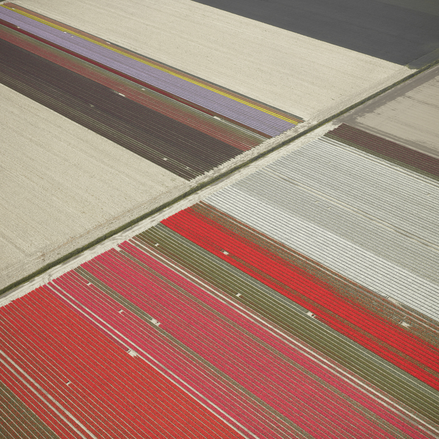 , 'Veld 23, Noordoostpolder, The Netherlands,' 2016, Gilman Contemporary