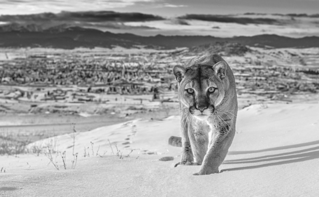 David Yarrow, 'Frontier Town', 2020, Photography, Archival Pigment Print, Samuel Lynne Galleries