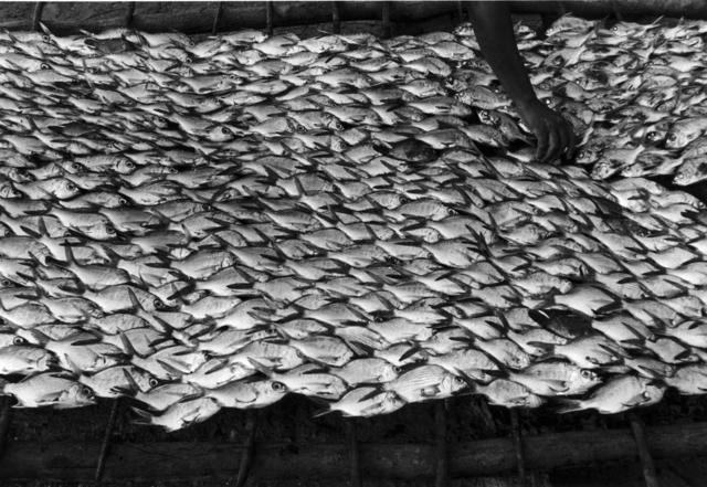 , 'Pescaditos de Oaxaca, Oaxaca,' 1992, ROSEGALLERY