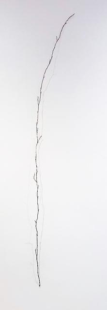 , 'Branch,' 2017, Miller Yezerski Gallery