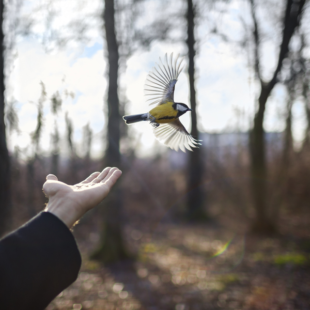 , 'The Goldfinch, St. Petersburg, Russia,' 2014, Robert Mann Gallery
