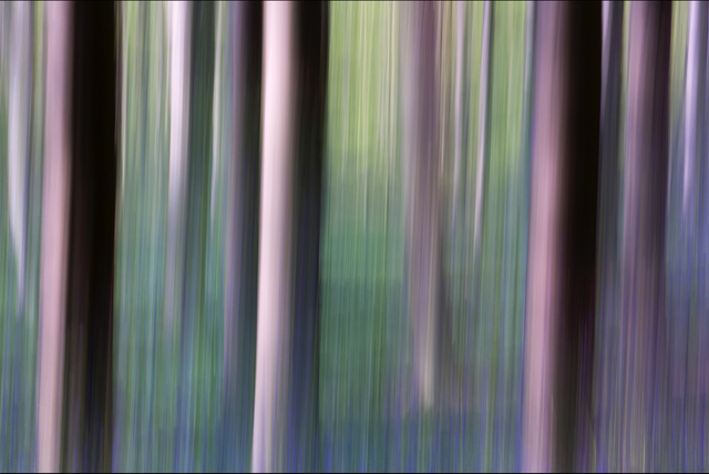 , 'Pure Nature 30, Sonian Forest, Brussels,' 2014, Galerıe Blue Square