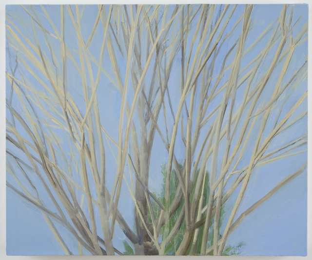 Sylvia Plimack Mangold, 'Winter Maple', 2007, Painting, Oil on linen, Alexander and Bonin