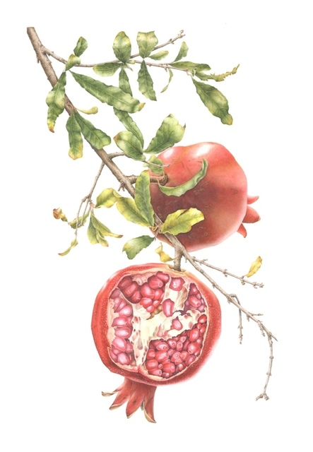, 'Punica granatum - Pomegranates ,' , Jacaranda Images