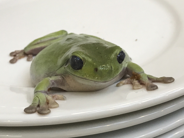 , 'Frogs and Plates No.1,' 2016, Dio Horia