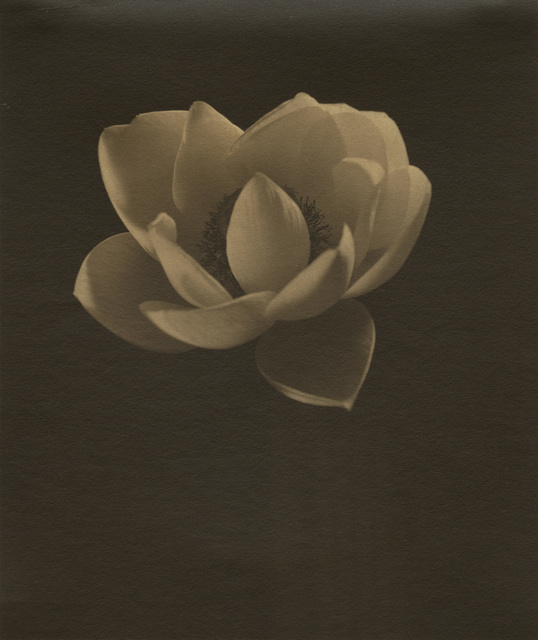 , 'Lotus,' ca. 1915, Gitterman Gallery