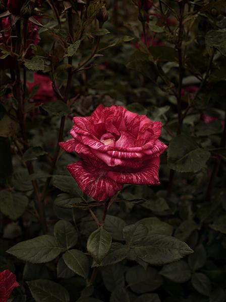 , 'Bloom #7,' 2018, MARS