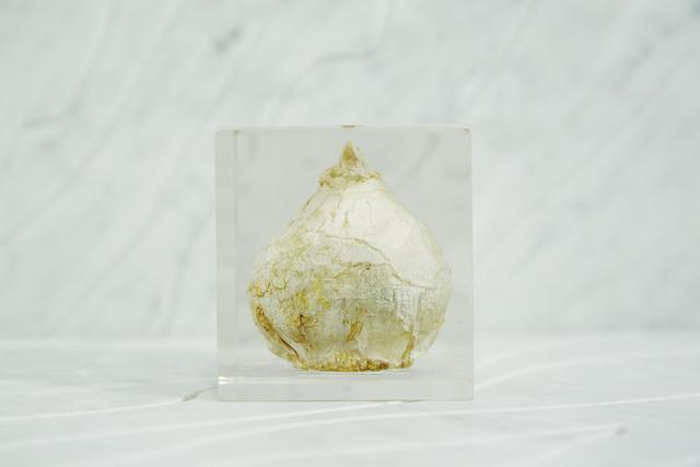 , '[acrylic bulb #4],' 2016, Chamber