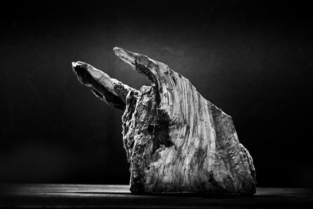 , 'Bull / Toro  ,' 2015, Jacaranda Images