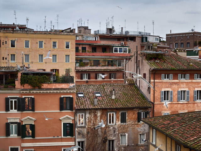 , 'Birds, Piazza dei Ponziani, Rome, February,' 2017, Edwynn Houk Gallery