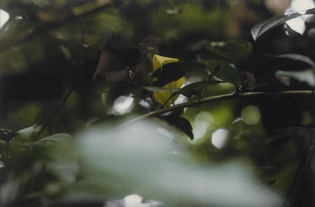 Gabriel Orozco, 'Asomo', 2001, Sotheby's
