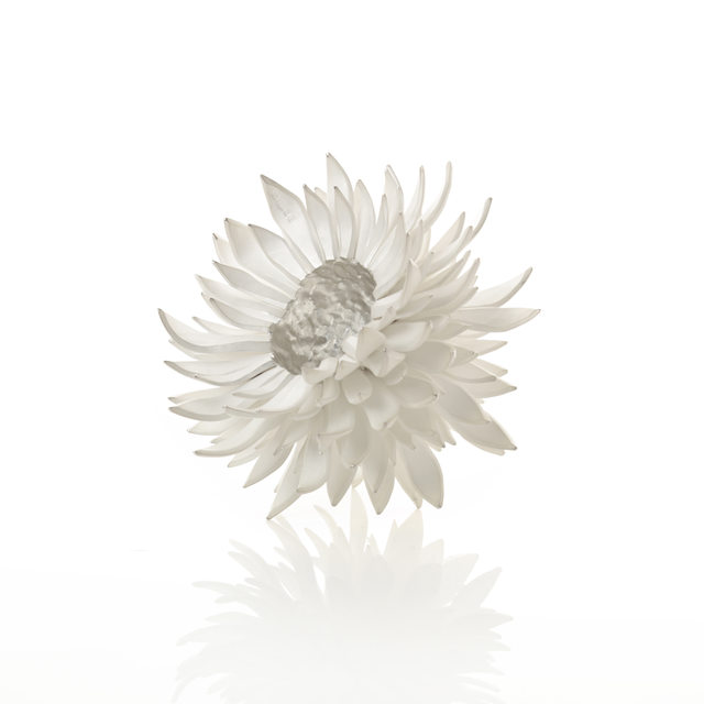 Junko Mori, 'A Silver Organism; Nigella', 2014, Adrian Sassoon