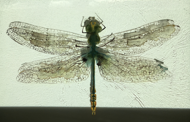 , 'Erpetogomphus Eutainia,' , Peninsula Gallery