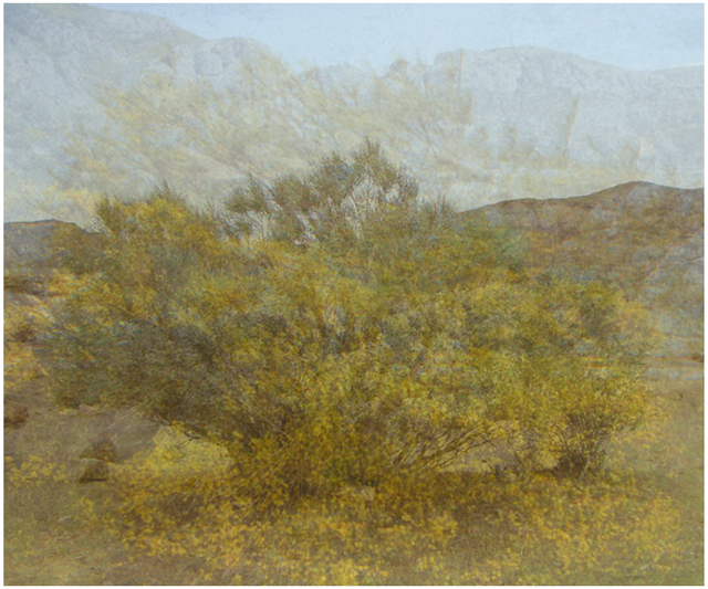 , 'Five Years out of a Death Row Sentence  (Dying Wish- Ratama Tree),' 2009-2016, Mark Moore Fine Art