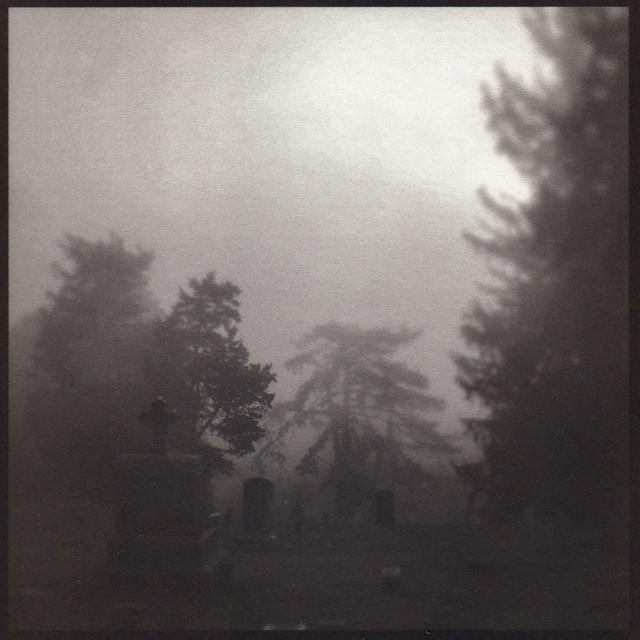 Denise Oehl, 'Soft Trees', 2018, John Davis Gallery