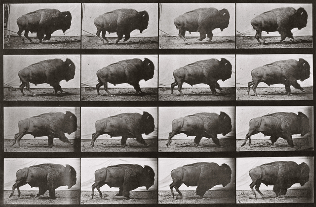 , 'Animal Locomotion: Plate 700 (Bison Galloping),' 1887, Huxley-Parlour