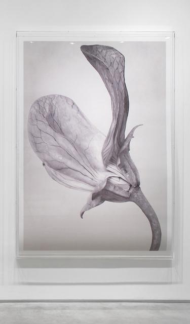, 'Art Forms in Mechanism XX,' 2016, Inman Gallery