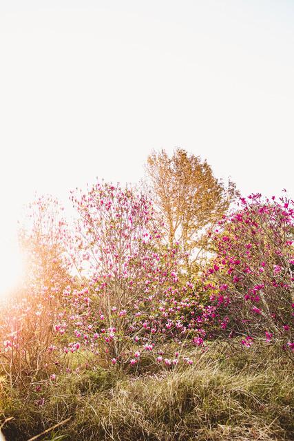 Rachael Baskerville, 'Magnolia Tree', 2019, FINEPRINT co Australia