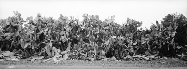 , 'Sabra Traces,' 2017, Zemack Contemporary Art