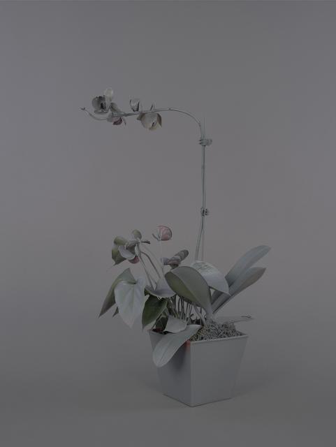 , 'Neutral Orchids (Dendrobium),' 2016, RYAN LEE