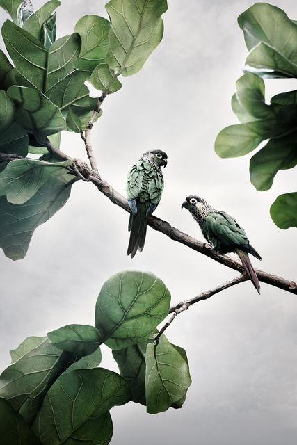Alice Zilberberg, 'Comfort Me Conures', 2020, Photography, Archival Pigment Ink, photo-eye Gallery