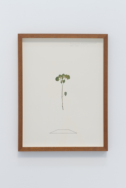 , 'Herbarium I,' 2014, narrative projects