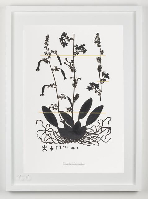 , 'Expedición extinción (Oneidium heteranthum),' 2018, Fernando Pradilla/El Museo