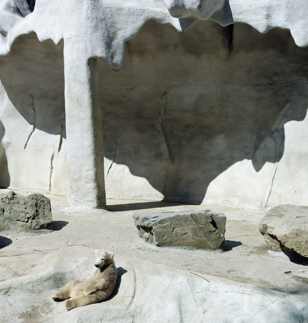 , 'Bear cub and cave,' , Galerie Dumonteil
