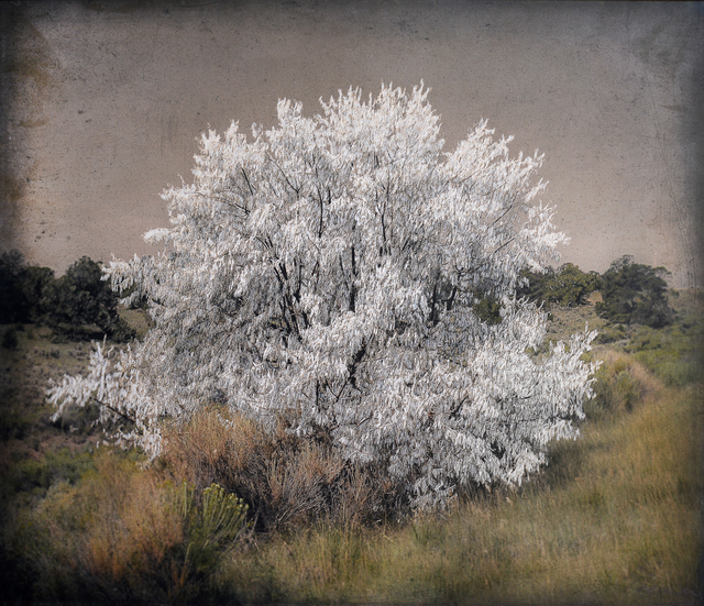 , 'Pale Tree, New Mexico  ,' , Etherton Gallery