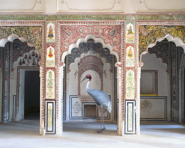 , 'The Search for Sattva, Ahhichatragarh Fort, Nagaur, 2014 ,' 2014, The Photographers' Gallery