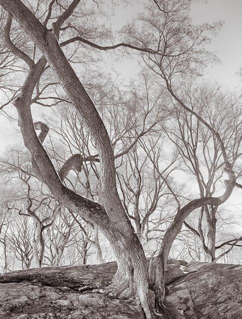 , 'Elm Tree on Rock, Central Park, New York,' , Soho Photo Gallery