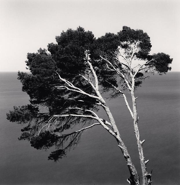 , 'Two Pine Trees,  Llucalcari, Mallorca, Spain,' 2017, G. Gibson Gallery