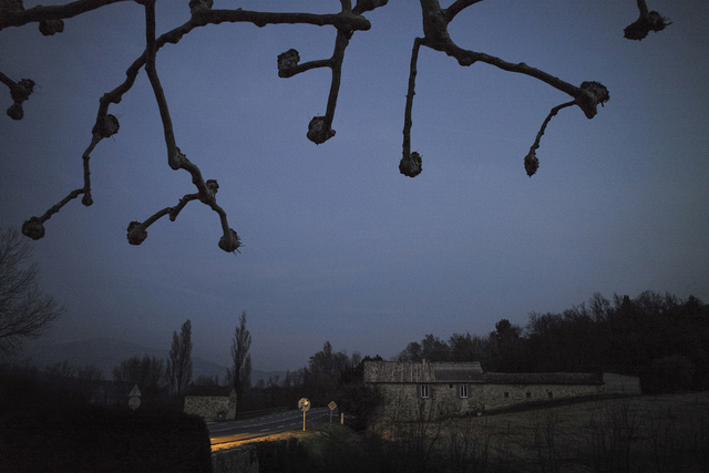 , 'Pruned Trees 2/10,' , Gail Severn Gallery