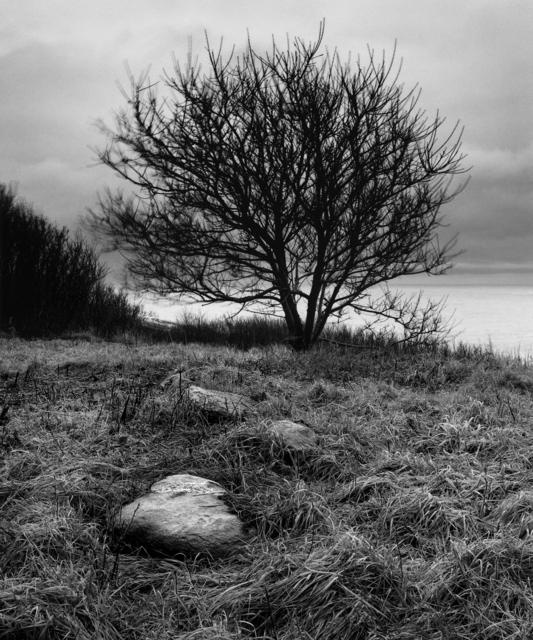 , 'Tree, Star Island,' , Pucker Gallery