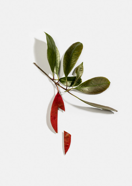 Delphine Burtin, 'Untitled, from the series 'Fragments'', 2018, GALLERY FIFTY ONE