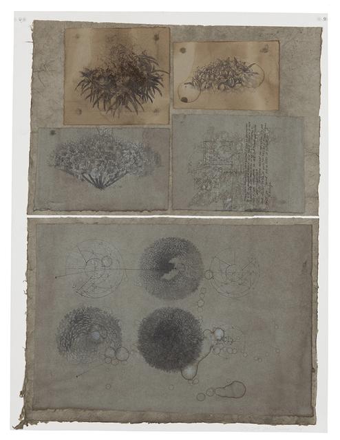 , 'Crisantemos-Spiral,' 2008, Galerie Nathalie Obadia