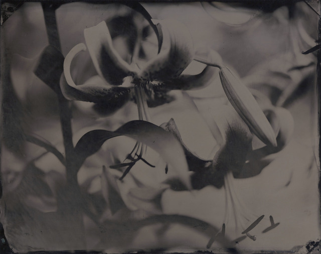 , 'Lily,' ca. 2008, Gallery NAGA