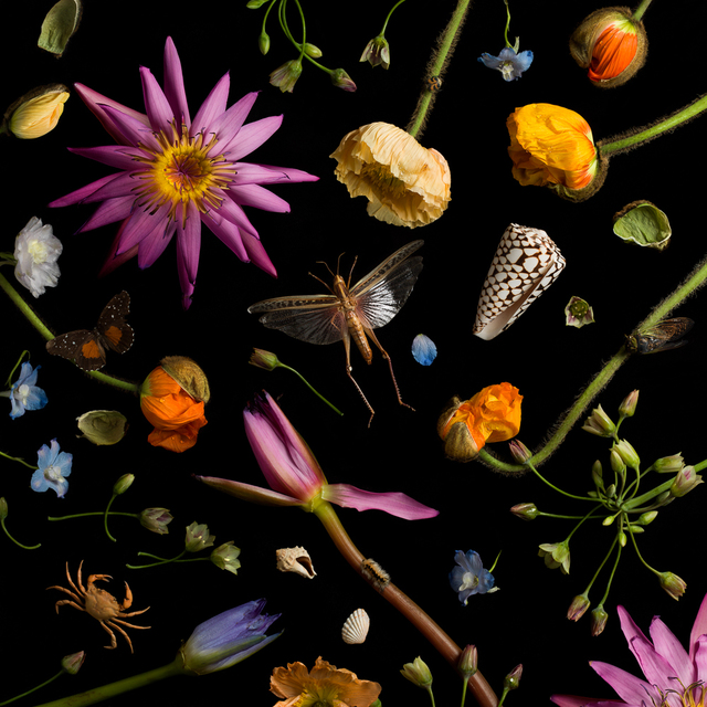 , 'Botanical IV (Water Lilies and Poppies),' 2013, Robert Klein Gallery