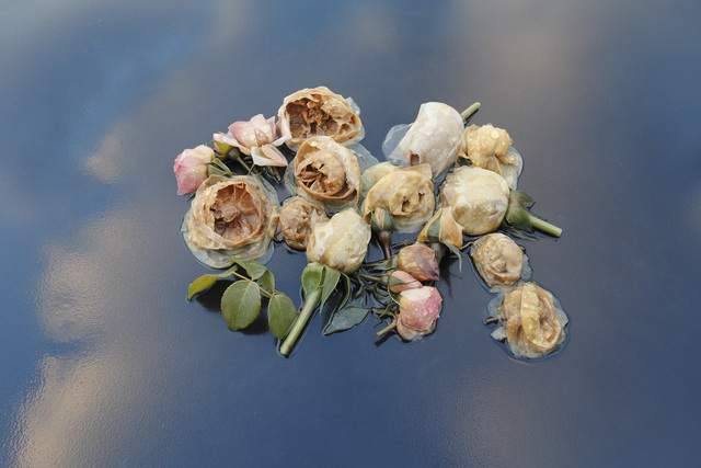 , 'Roses, Table, Sky, (from the Ghost Garden Series),' 2014, Gallery NAGA