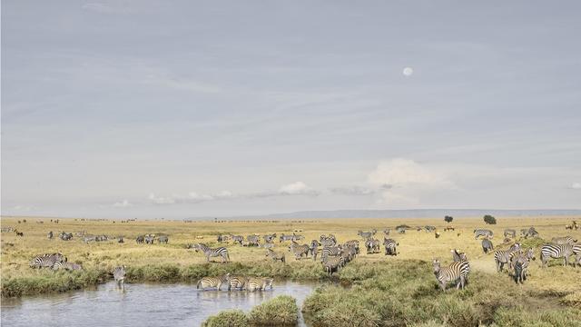 David Burdeny, 'Zebras at Watering Hole, Maasai Mara, Kenya', 2019, Galerie de Bellefeuille
