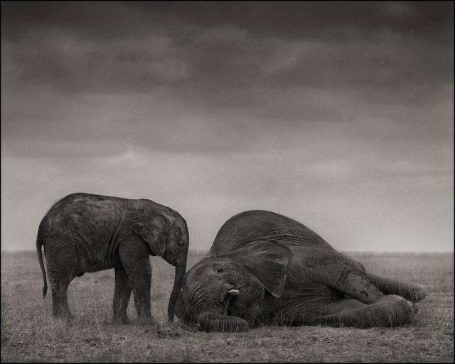 , 'The Two Elephants, Amboseli, 2012,' 2012, photo-eye Gallery