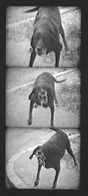 , 'I cani lenti (Slow dogs),' 1971, Galleria Michela Rizzo