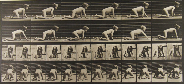 Eadweard Muybridge, 'Animal Locomotion', 1886, Howard Greenberg Gallery