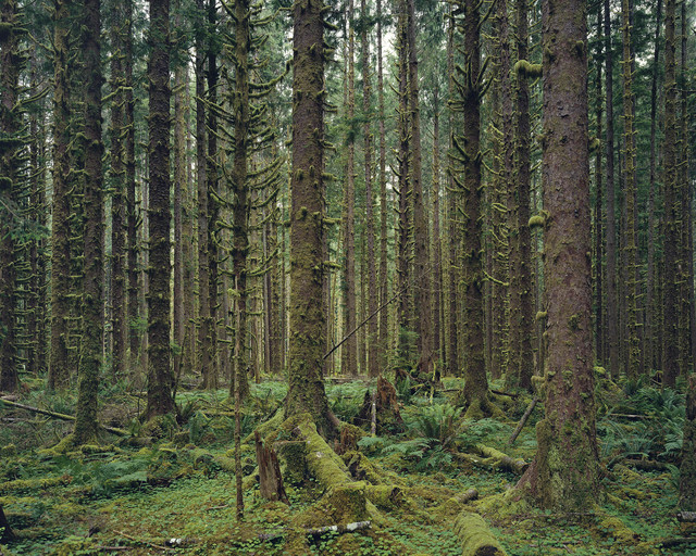 , 'Hoh Rain Forest, Olympic National Park, Washington 2017,' 2017, Sikkema Jenkins & Co.