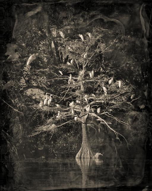 , 'Nesting Tree Study #1,' 2012, Etherton Gallery
