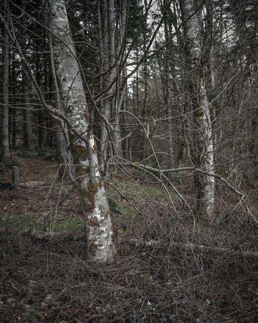 Chris Bennett, 'From the series Darkwood, #6', 2014, Circuit Gallery