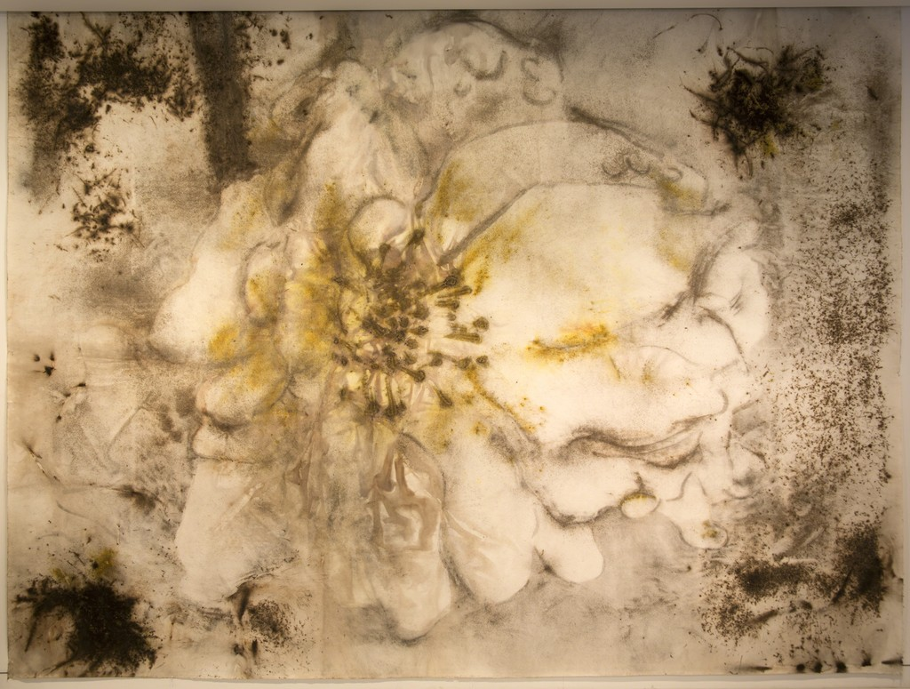"""A Cherry Blossoms""