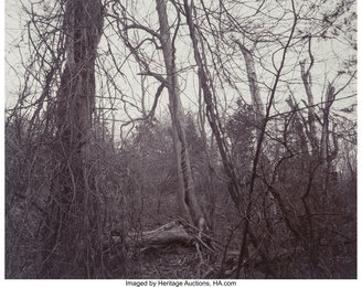 Woods (Belmont, Massachusetts) and Lightening (Nevada) (two photographs)