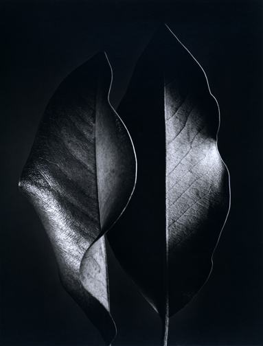 , 'Two Leaves,' 1952, Scott Nichols Gallery