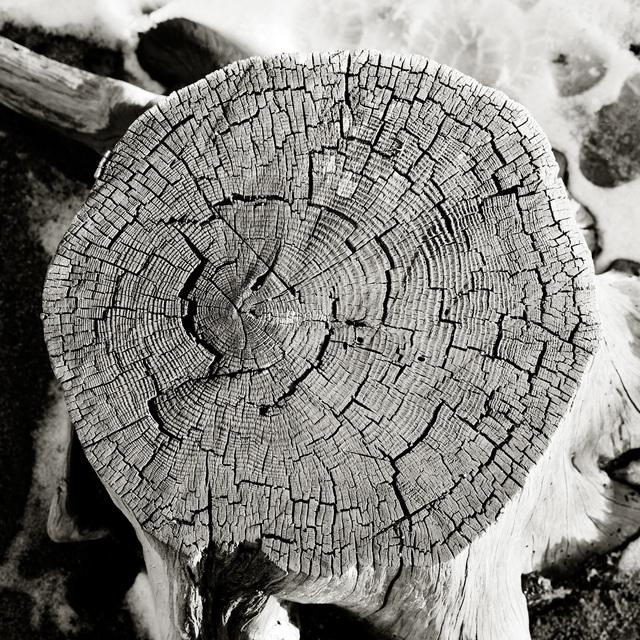 Rick Chapman, 'Stump, CA', 1996, Dolby Chadwick Gallery